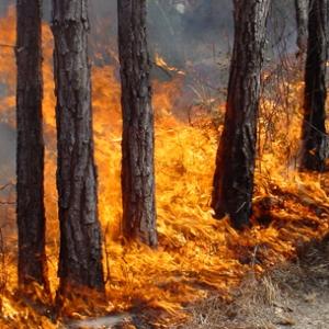 Губернатор Ростовской области утвердил план основных мероприятий по подготовке к пожароопасному периоду 2014 года