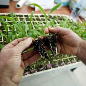 Депутаты законодательного собрания Ростовской области выступили против решения о госрегистрации ГМО-семян с июля 2014 года