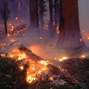 По распоряжению департамента лесного хозяйства Ростовской области с 22 по 31 мая на северной территории Ростовской области вводится ограничение пребывания граждан в лесах и въезда в них транспортных средств, а также  проведения всех видов работ, за исключением работ связанных с охраной лесов от пожаров