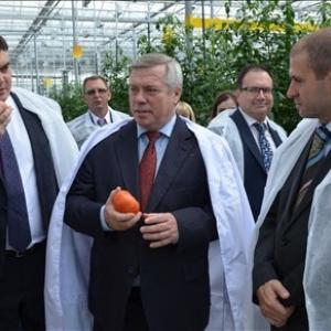После выхода предприятия на полную мощность производство тепличных овощей на Дону увеличится в два раза