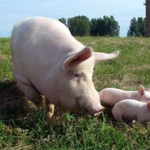 В двух хозяйствах Азовского района Ростовской области ветеринарные врачи выявили у животных заболевание хламидиозом