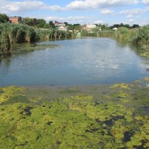 На территории бывшего санатория «Ростовский» в донской столице выявлены нарушения водоохранного законодательства