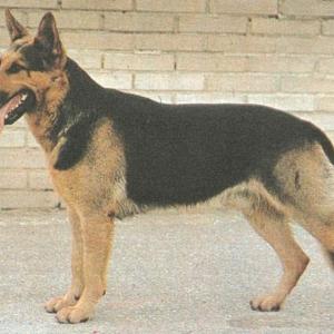 В Шахтах (Ростовская область) сотрудники поисково-спасательного подразделения спасли пса