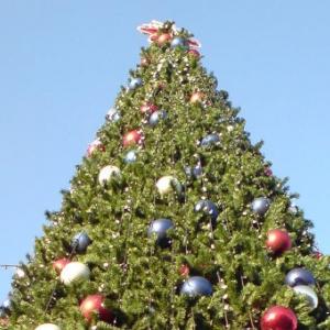 Около сотни новогодних елок появятся в Ростове к 10 декабря