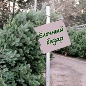 Елочку для новогоднего торжества можно купить за 3000-7000 рублей.