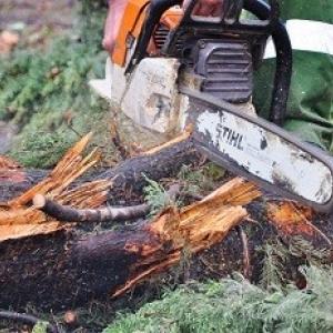 незаконная вырубка деревьев на Вятской Ростов-на-Дону