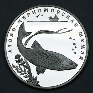 азово-черноморская шамая