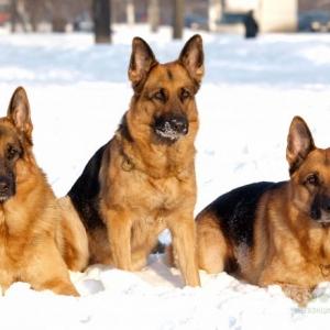 Жители России, Казахстана и Украины уже четыре года пытаются спасти от усыпления 20 несуществующих собак.