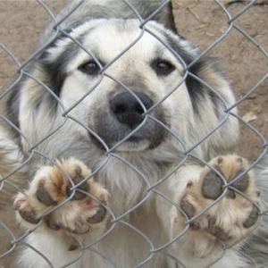 В Ростове вынуждены закрыть приют для собак.