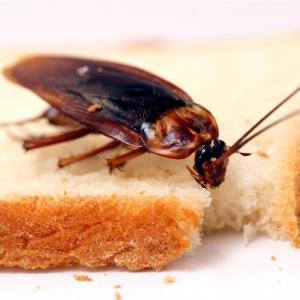 В Ростове в ресторане IKEA нашли таракана.