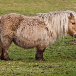 Животное увел из конюшни безработный