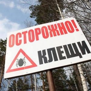В Ростове-на-Дону превышен эпидзначимый порог численности клещей.