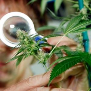 В Ростове-на-Дону был задержан молодой мужчина, хранивший марихуану в самоваре.