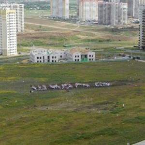 В Ростове жители Суворовского микрорайона устроили флешмоб, чтобы добиться открытия школы