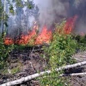 Тело погибшего обнаружено при тушении травы под городом Шахты.