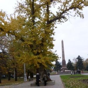 Побег от «Тополя Победы» из Волгограда-Сталинграда посадили в Ботаническом саду ЮФУ.