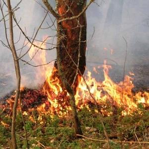Решение об установлении противопожарного режима приняла городская администрация Таганрога