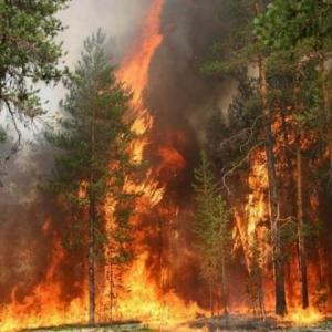 В Ростовской области горит 3 га соснового леса, на месте работаю пожарные