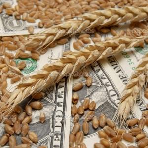 Молодой парень продал чужое зерно вместо того, чтобы доставить его на элеватор