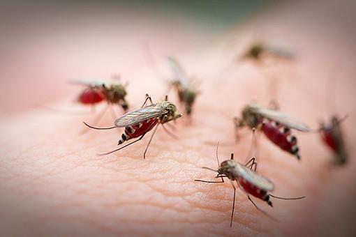 паразиты среди людей